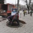 Млади липи на ларгото в Бургас